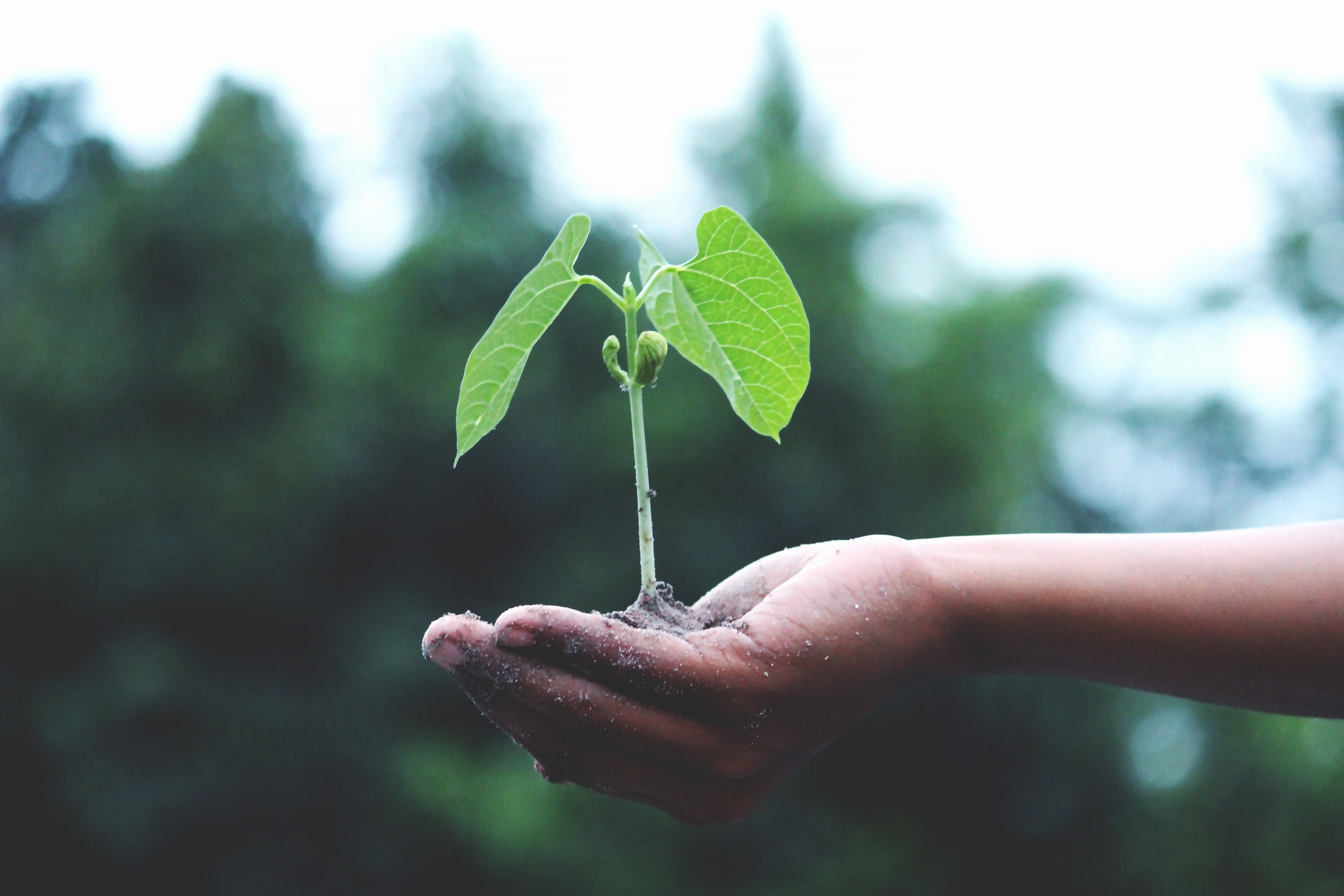 hand holding a green plant